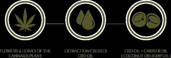 CBD 101 Extraction Diagram